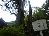 P1070253
